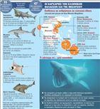 Καρχαρίας Κινδυνεύει περισσοτερο από τον άνθρωπο