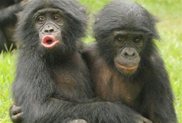 Οι πίθηκοι παρηγορούν ο ένας τον άλλον... ανθρώπινα